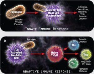 Inmunomodulacion bacteriana