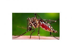 Mosquito Veneno