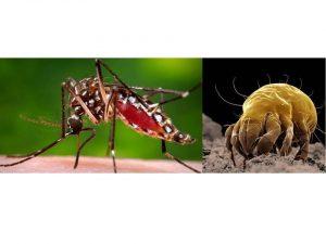 mosquito y ácaros alergias