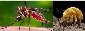 Mosquito y acaro