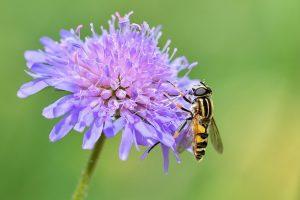 Consejos Alergia Veneno